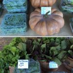 Fresh produce like pumpkins and kale greet shoppers on market day.